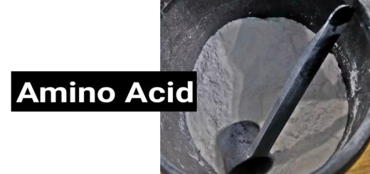 Amino Acid in Hindi